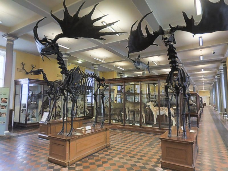 Our Tour of the Dublin Natural History Museum on Evoke.ie
